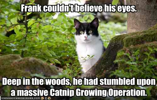 Funny Cat Pictures Images Catnip Wallpaper And Background P Os
