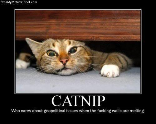 Funny Cat Pictures Images Catnip Kitty Wallpaper And Background P Os
