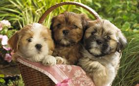 cute puppies in a basket