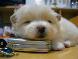 Cute chó con hình nền called cute cún yêu, con chó con
