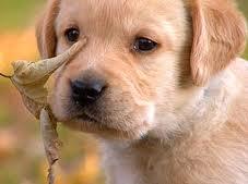 cute 강아지