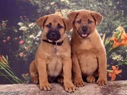 cute puppy twins