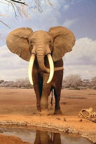 象, 大象
