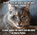 lennon-potter-cat