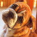 pups  - puppies icon