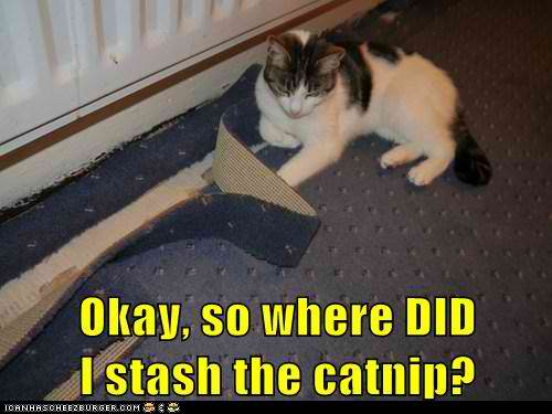Funny Cat Pictures Images Where Is That Catnip Wallpaper And Background P Os