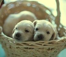 Puppies wallpaper called Aaaawwww:O