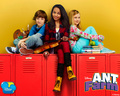 Ant Farm - ant-farm wallpaper