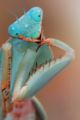 Are you pondering what i am pondering? - praying-mantises photo