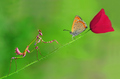 Beautiful Mantis and Butterfly! - praying-mantises photo