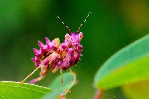 Beautiful Mantis!