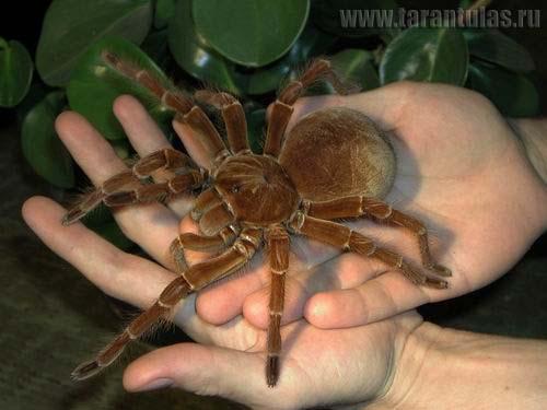 Beautiful! Tarantula!