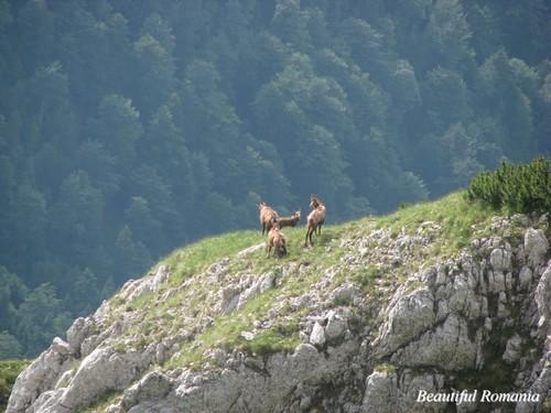 Beautiful romanian landscapes Carpathians wild animali Eastern Europa