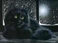 Black Cat! - black-cats photo
