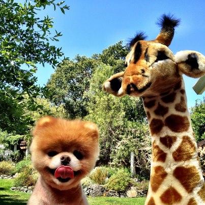 Boo & Giraffe