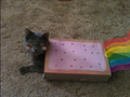 Cat in poptart costume! - nyan-cat photo