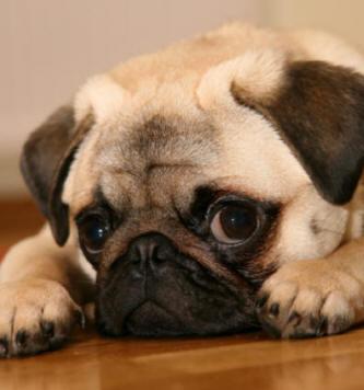 Doggie <3