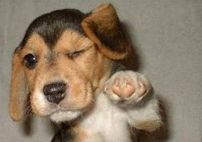 All Small Dogs Doggie
