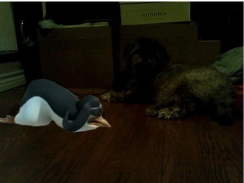 I think Kowalski's scared of my dog.....