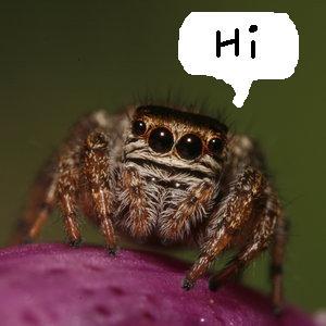 Jumping! Spider!