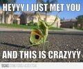 Mantis! Fun!