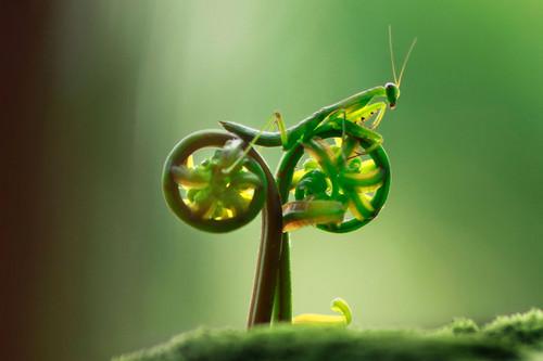 Mantis on a bike!