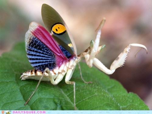 Mantis!