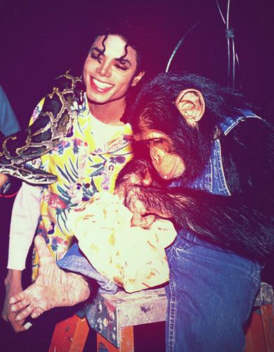 Michael Jackson and his pet Bubbles Jackson the chimp ♥♥