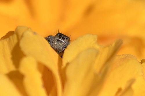 Peeking Spider!