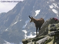 Romania mountains landscape Wild animals scenery in Europe - romania wallpaper