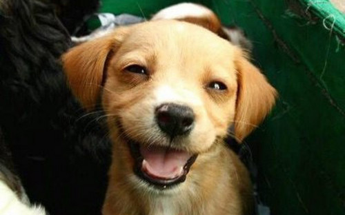 Smiling Puppy <3