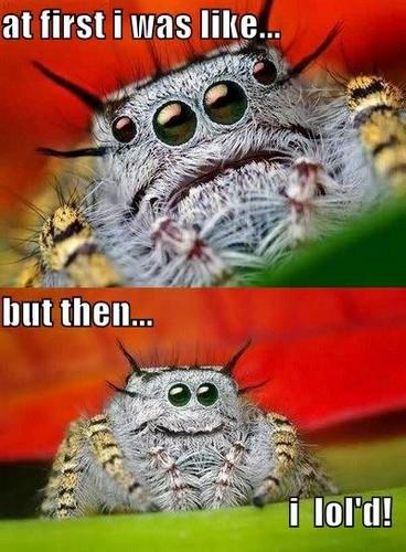 거미 Fun!