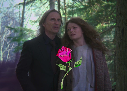 The Enchanted Rose of Storybrooke