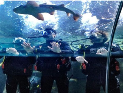 The Wanted Shark Swimming