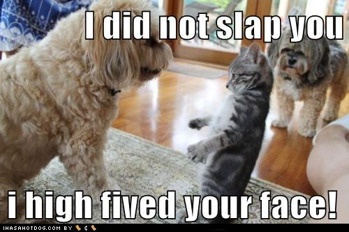 i didnt slap you! i high-fived your face!