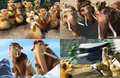 ice age 4 new pics - ice-age-4-continental-drift photo