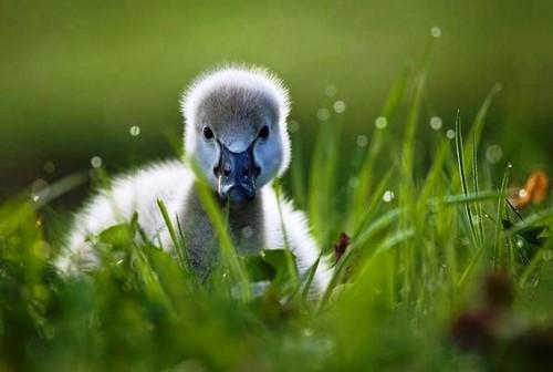 Baby canard