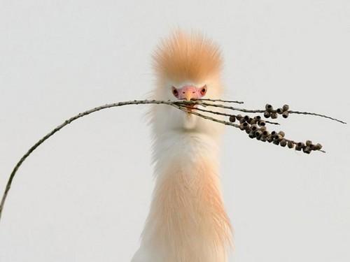 जानवर वॉलपेपर entitled Bird