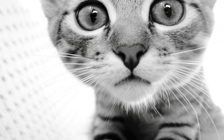 Cat-cats-32040775-1440-900.jpg