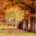 Dreamy♥Fall  - daydreaming icon