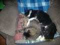 My Cats - fanpop-pets photo