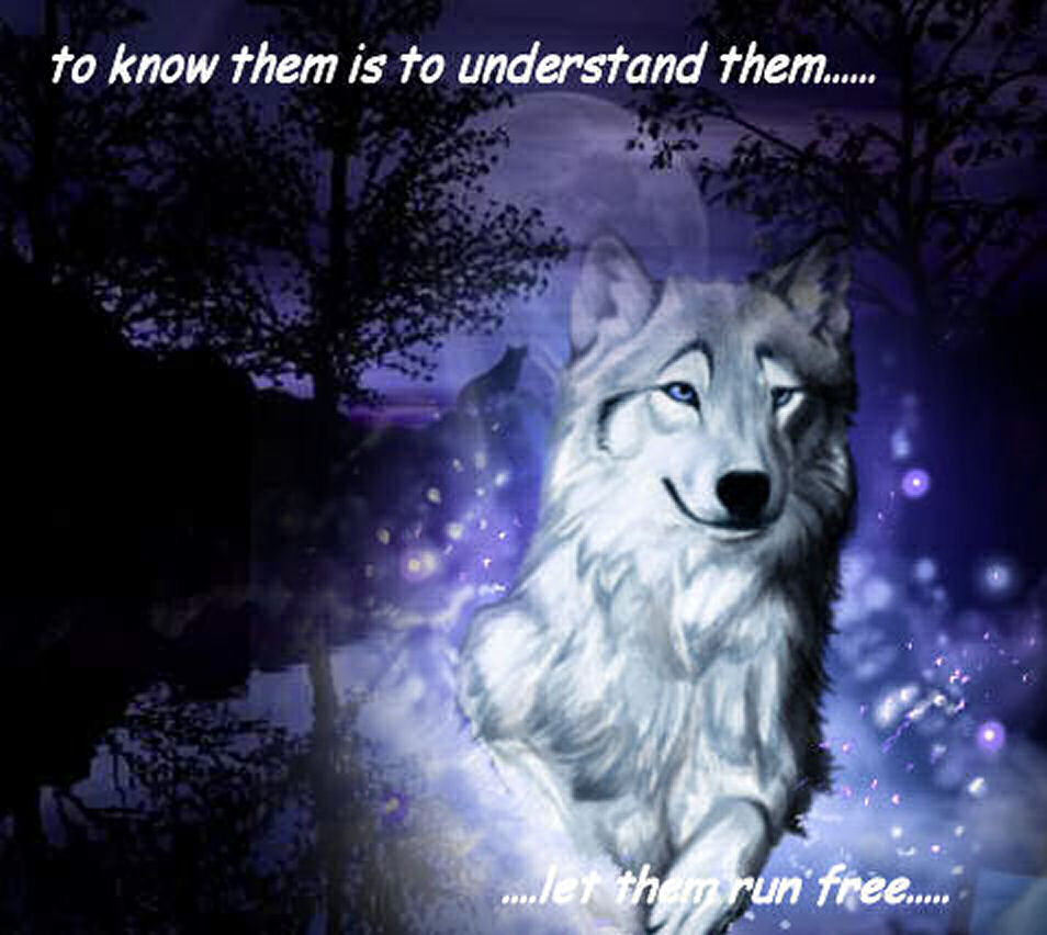 Wolves run free