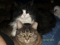 Sylvester and Sierra - fanpop-pets photo