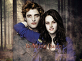 TWILIGHT - twilight-series wallpaper