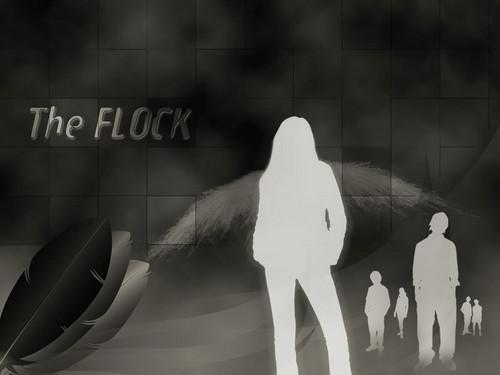 The Flock fond d'écran