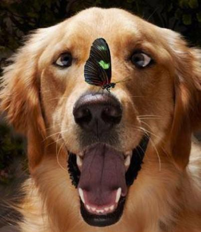 funny dog with butterfly, kipepeo on his nose