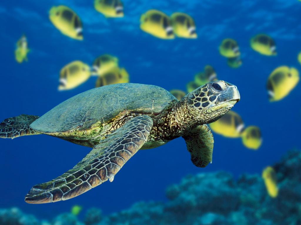 西沙群岛海龟蛋
