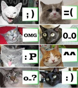 What are lolcats also known as?