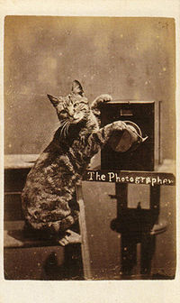 When did the first ideas for lolcats come from?