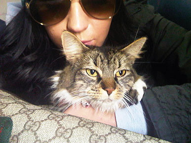 True or False:  Katy hated cats before she got Kitty Purry.